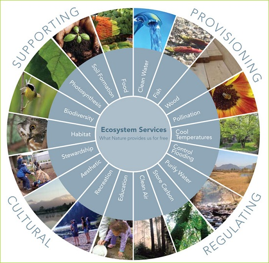 The Importance of EcoSystem Services, Natural Capital, and Rewilding