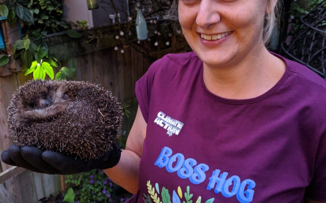 Hog Blog: Tamma's Tips for Helping Hedgehogs